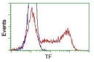 GTX83513 - Transferrin