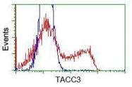 GTX83531 - TACC3 / ERIC1