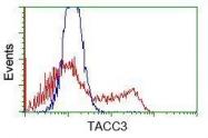 GTX83532 - TACC3 / ERIC1