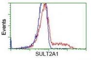 GTX83536 - SULT2A1 / HST