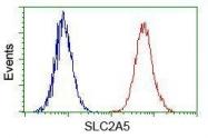 GTX83631 - GLUT5 / SLC2A5