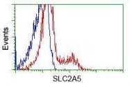 GTX83632 - GLUT5 / SLC2A5