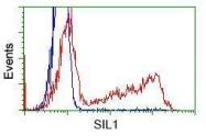 GTX83642 - SIL1 / BAP