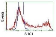 GTX83653 - SHC1 / SHC