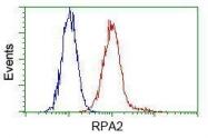 GTX83691 - RPA2