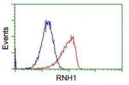 GTX83696 - Ribonuclease inhibitor (RNH1)