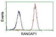 GTX83725 - RanGAP1