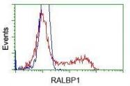 GTX83727 - RALBP1