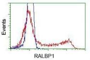 GTX83728 - RALBP1
