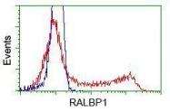 GTX83730 - RALBP1