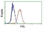 GTX83801 - Prolactin / PRL