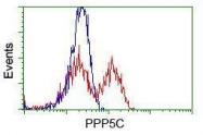 GTX83832 - PPP5C