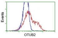 GTX83956 - Otubain-2 (OTUB2)