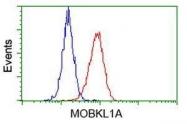 GTX84104 - MOB4A