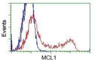 GTX84131 - MCL1