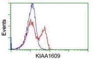 GTX84267 - KIAA1609
