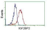 GTX84305 - IGF2BP2
