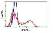 GTX84332 - Grp75 / HSPA9