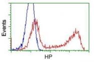 GTX84349 - Haptoglobin