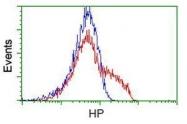 GTX84352 - Haptoglobin