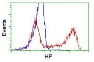 GTX84354 - Haptoglobin