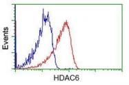GTX84377 - HDAC6