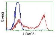 GTX84378 - HDAC6