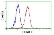 GTX84379 - HDAC6