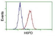 GTX84393 - H6PD / GDH