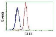 GTX84426 - Glutamine synthetase