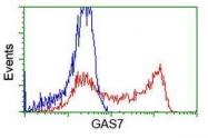 GTX84464 - GAS7