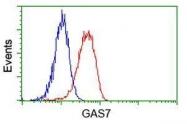 GTX84465 - GAS7