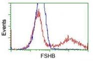GTX84477 - Follicle-stimulating hormone / FSH