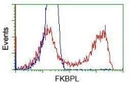 GTX84490 - FKBPL
