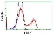 GTX84495 - FHL1