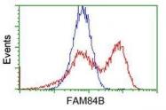 GTX84519 - FAM84B