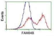 GTX84524 - FAM84B