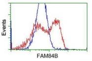 GTX84530 - FAM84B