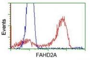 GTX84534 - FAHD2A