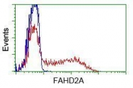 GTX84539 - FAHD2A