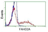 GTX84541 - FAHD2A