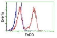 GTX84542 - FADD