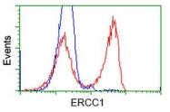 GTX84554 - ERCC1