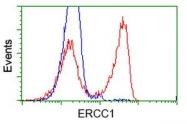 GTX84556 - ERCC1