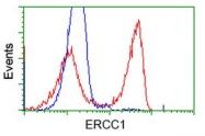 GTX84558 - ERCC1