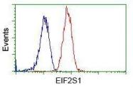 GTX84578 - EIF2A / EIF2S1