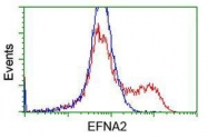 GTX84584 - Ephrin-A2