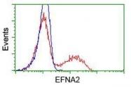 GTX84590 - Ephrin-A2