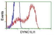 GTX84592 - DYNC1LI1