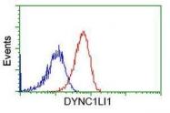 GTX84594 - DYNC1LI1